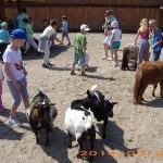 Wspólne karmienie zwierząt